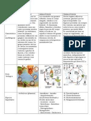 enterobiasis portugálul