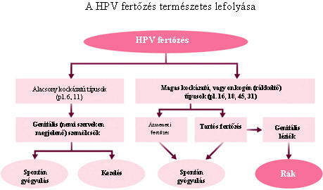 hpv magas kockázatú egyéb észlelt)