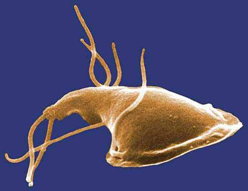 giardien mensch behandeln ami nőgyógyászati rák