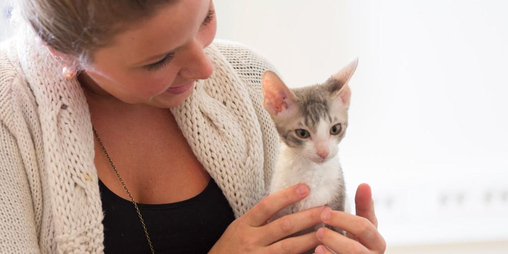 giardia hos katt)