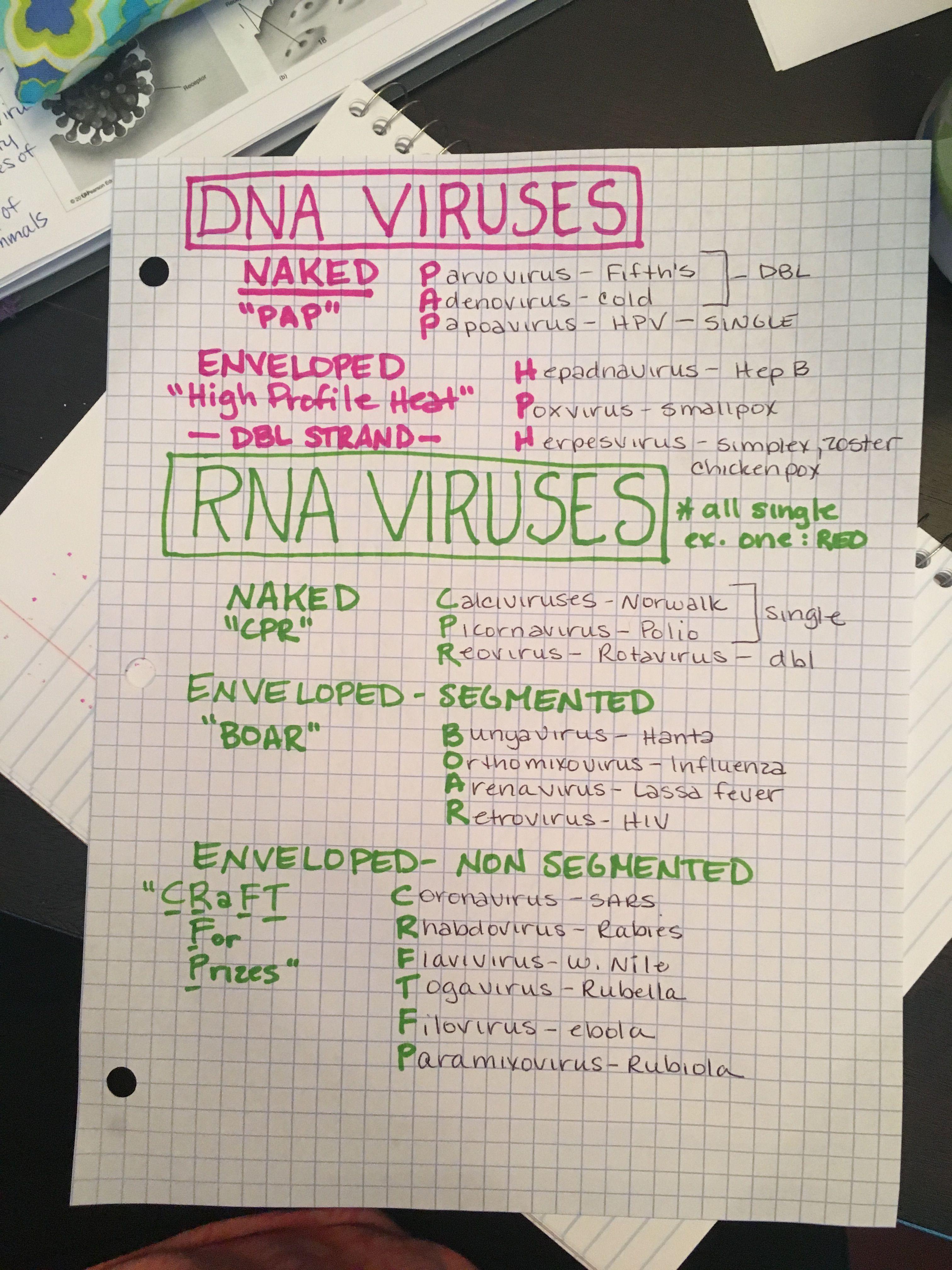 hpv vírus rna vagy dna