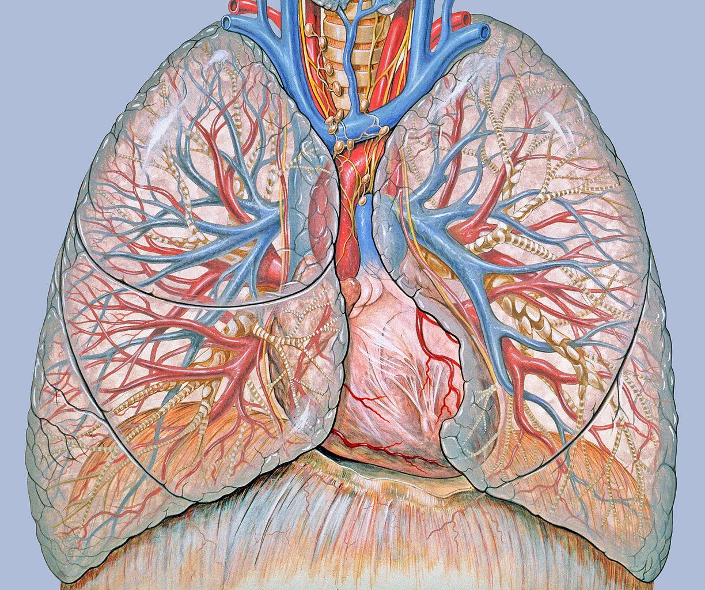 Tüdődaganatok: a tüdőrák sokféle betegség
