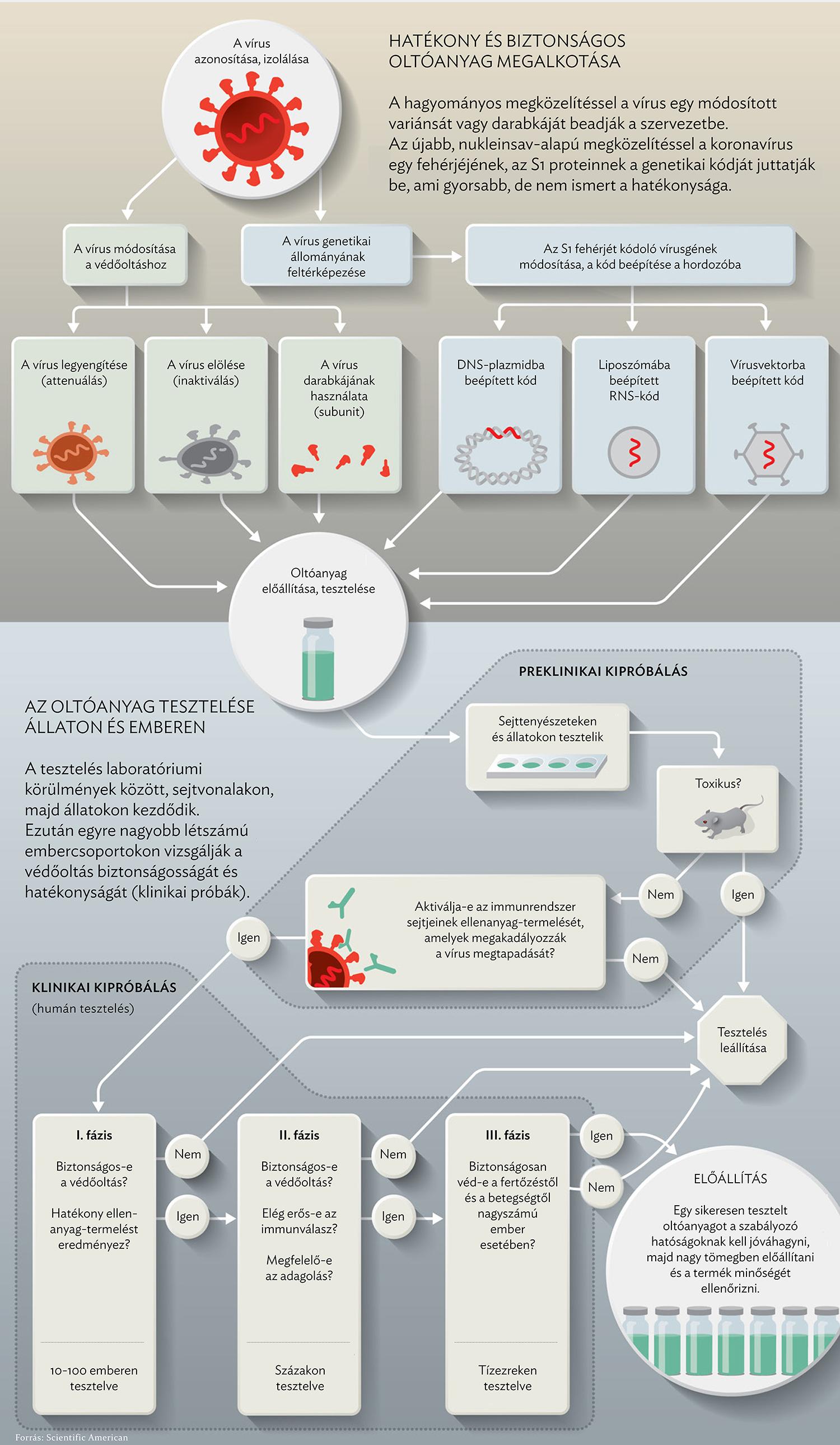 A koronavírus elleni védőoltás fejlesztésének irányai | National Geographic
