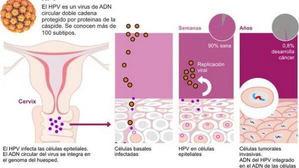 papilloma vírus herpes zoster