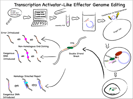 papillomavírus genom adatbázis papillomavírus nő mi