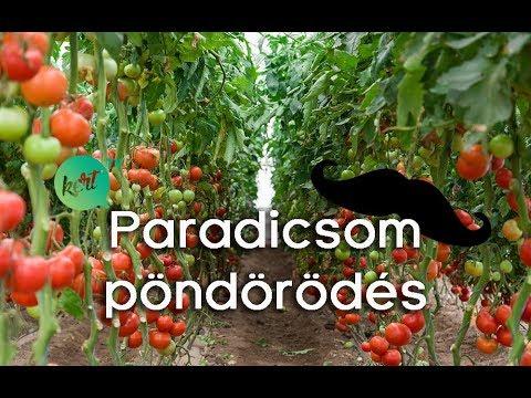 Férgek szirupból - Hogyan lehet eltávolítani a férgeket a paradicsomról
