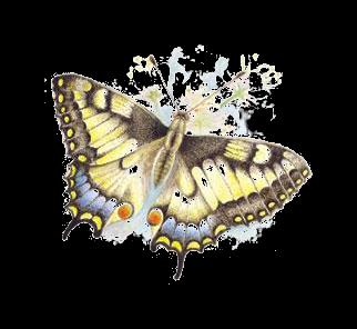 turmix méregtelenítés A papilloma vírus törülközőkkel terjed