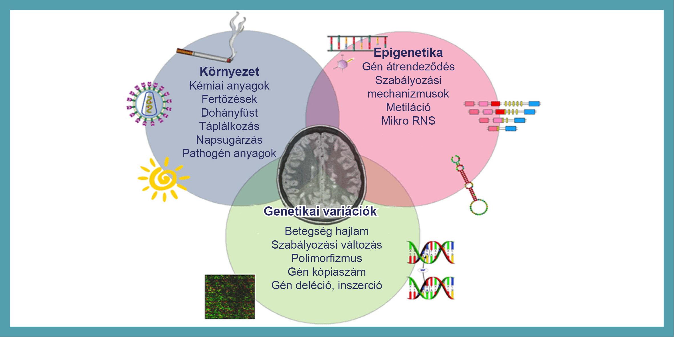 rák genetikai betegség)