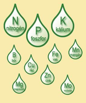 talpi növényzet, amely nitrogént éget