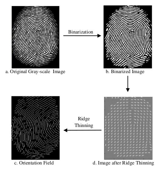 a gyermekek anális ujjlenyomat-elemzése