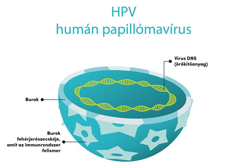 az ember által terjedő papillomavírus