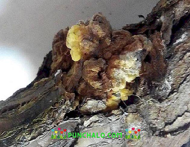 Erdei fák betegségei | Digitális Tankönyvtár