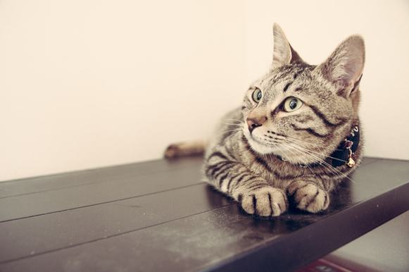giardia kot leczenie)