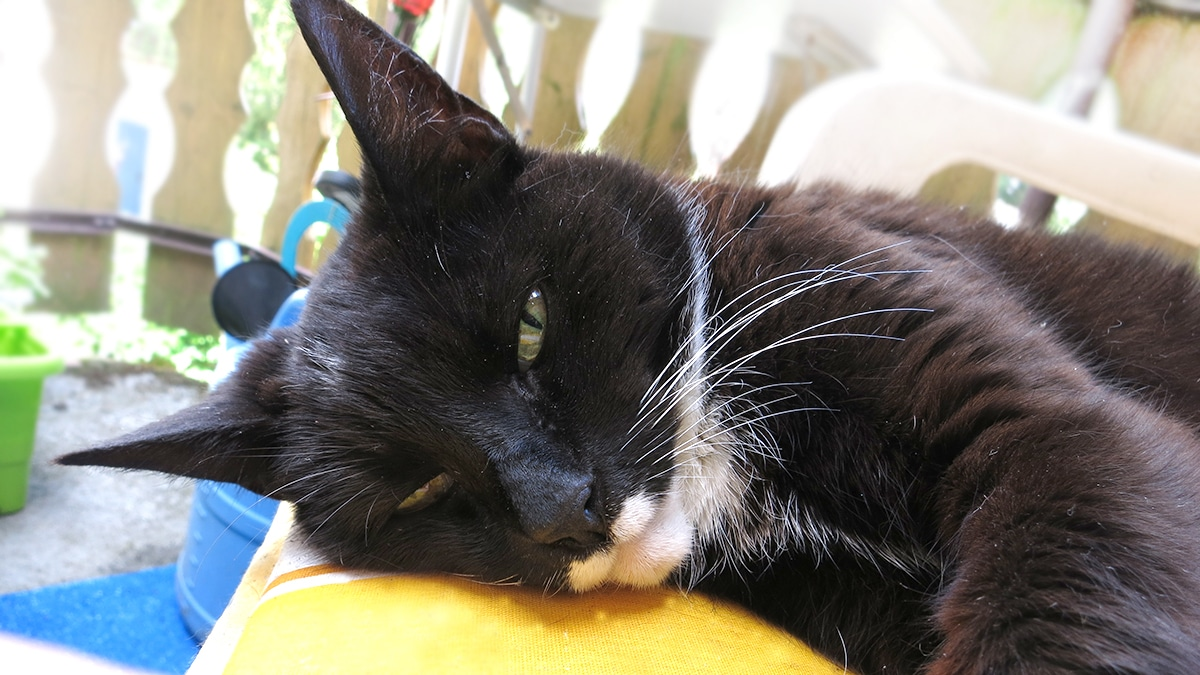 giardien bei katzen homoopathisch behandeln)